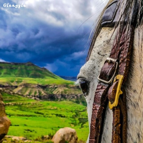 Glengyle - horse