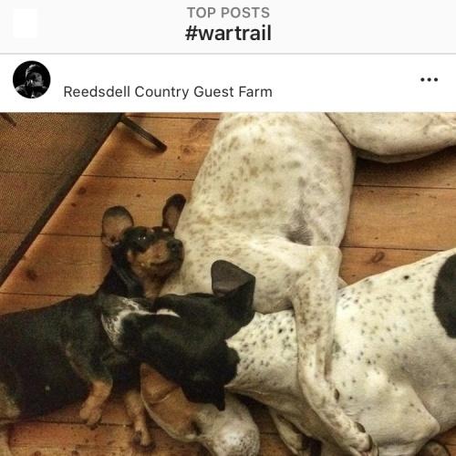 Instagram - Reedsdell1
