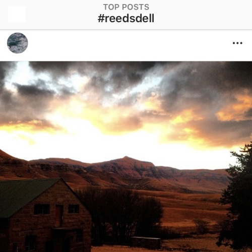 Instagram - Reedsdell2