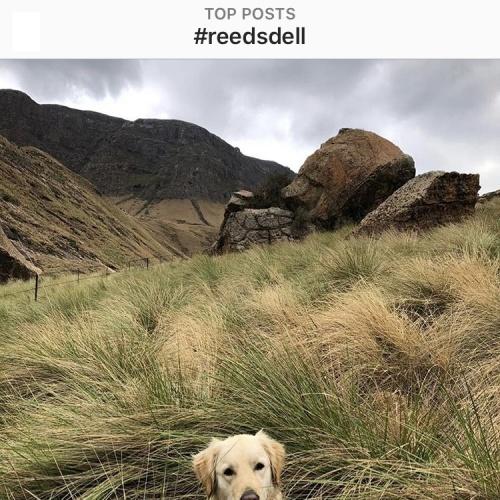 Instagram - Reedsdell3