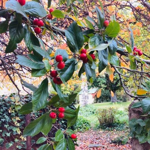 Reedsdell - garden