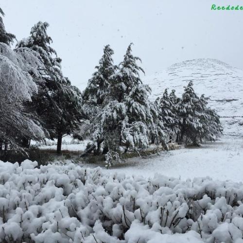 Reedsdell - snow2