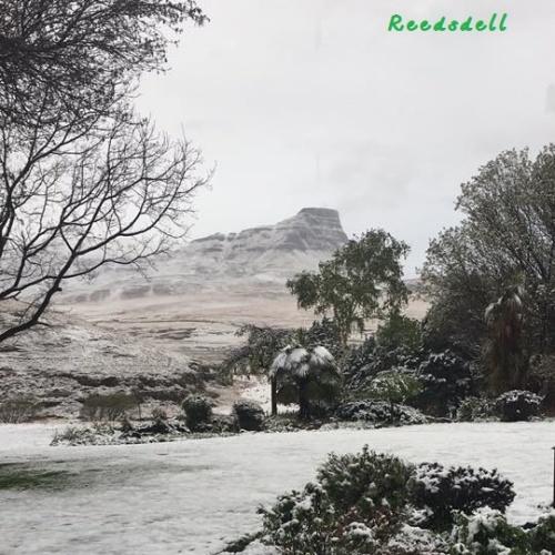 Reedsdell - snow3