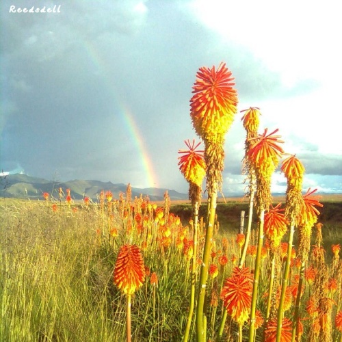 Reedsdell - wildflowers1