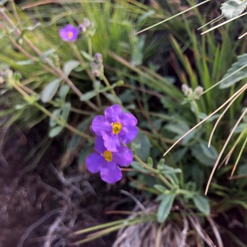 Reedsdell - wildflowers2