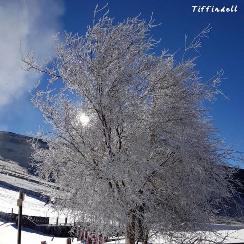 Tiffindell - tree