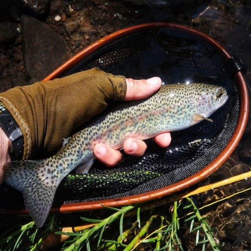 Trout3 - Peter Brigg