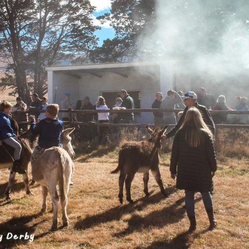 Wartrail - Donkey Derby2