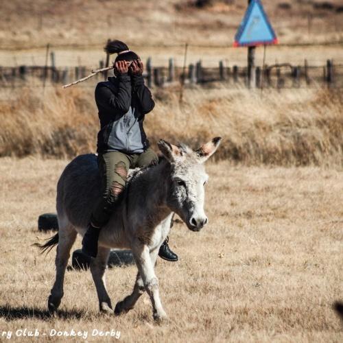 Wartrail - Donkey Derby3
