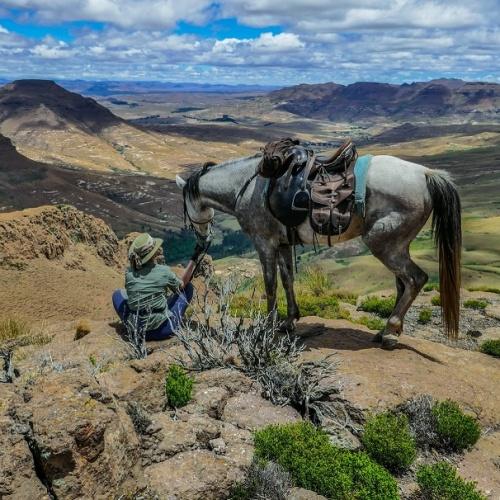 Wartrail - horse