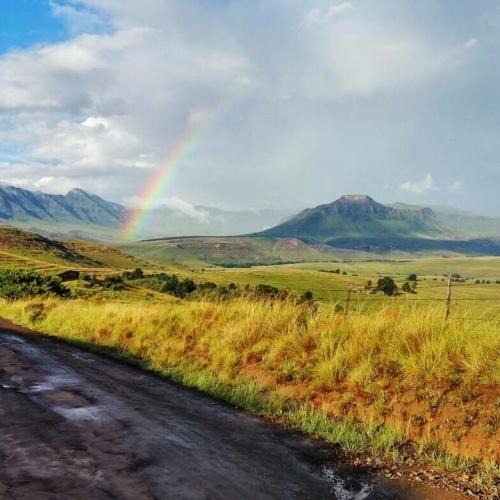 Wartrail - rainbow