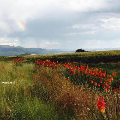 Wartrail - wildflowers