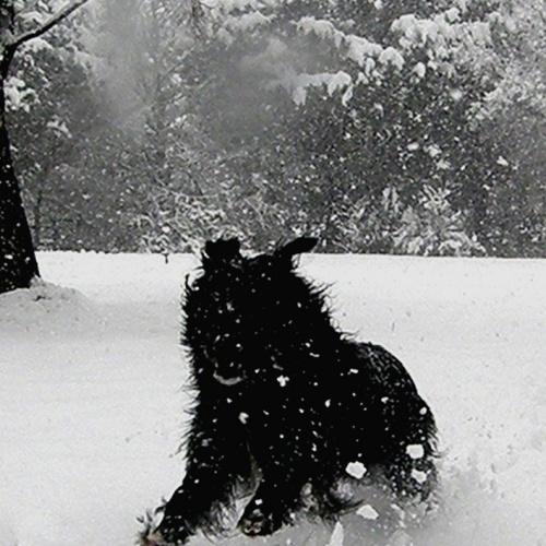 Wartrail - winter4