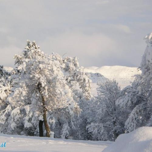 Wartrail - winter5
