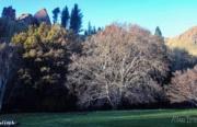 Balloch - Garden