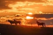 Bidstone - Horses