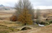 Faskally - Bridge2