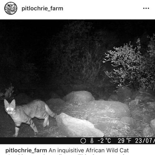 Pitlochrie cam1